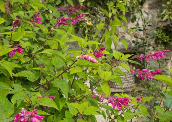 Fiori autunnali: nomi e foto per colorare il giardino