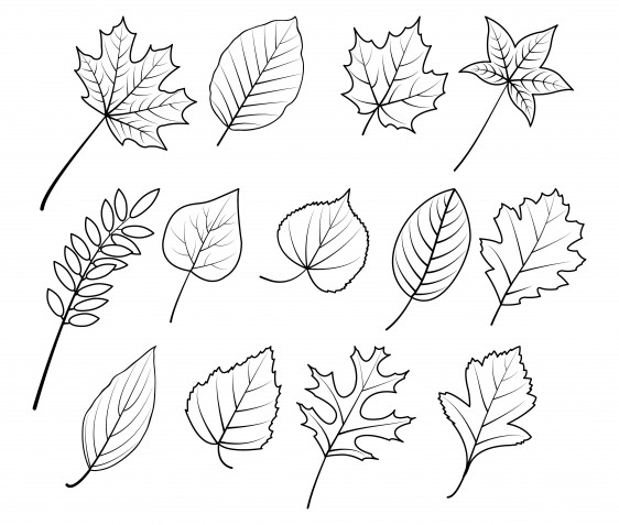 Disegni da ricamare a punto catenella a tema autunno: 7 immagini gratis