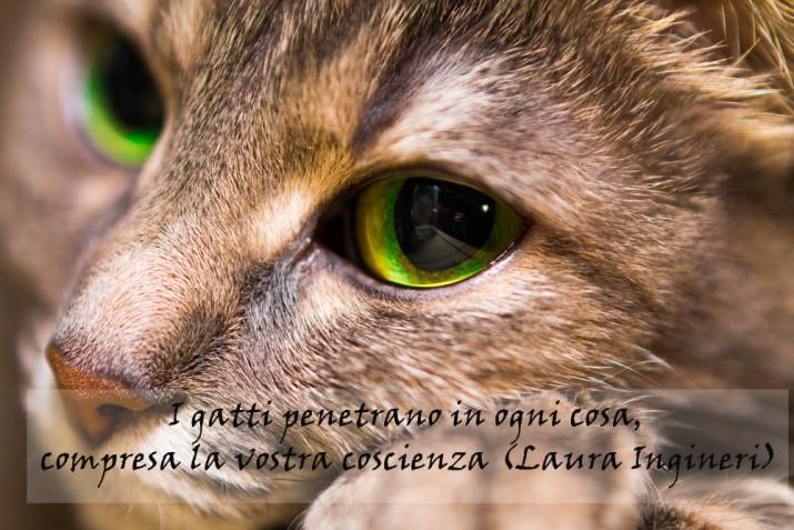 Giornata del gatto: 7 immagini con frasi per gli amici felini