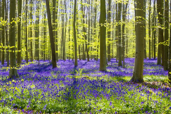 Sfondi Desktop Primavera Gratis 9 Immagini Bellissime Donnad