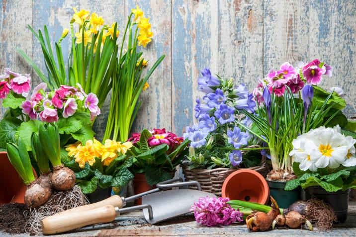 Sfondi desktop primavera gratis: 9 immagini bellissime