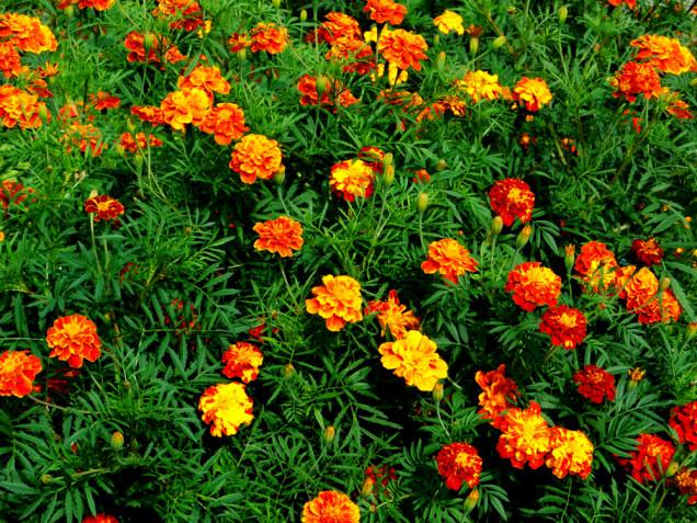 Fiori estivi da giardino in pieno sole: i più belli