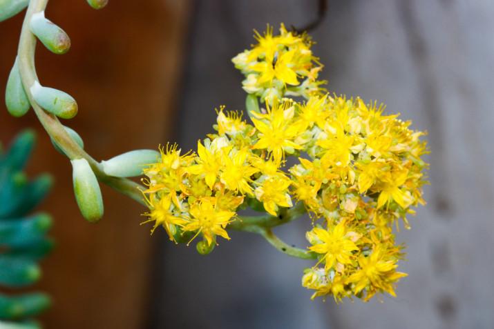 Piante grasse con fiori: le immagini più belle