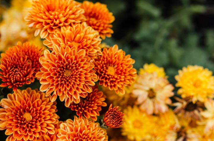 Quali fiori coltivare per il cimitero: i più belli