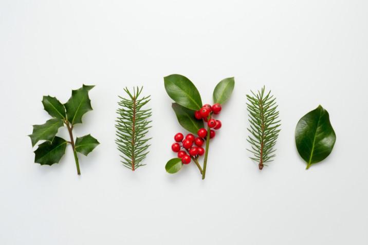 Vischio di Natale e agrifoglio: le immagini più belle da inviare su WhatsApp