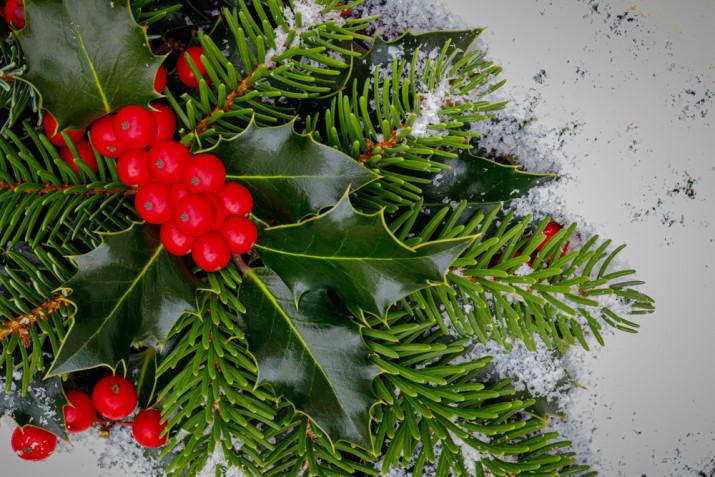 Piante di Natale: le più belle per decorare casa