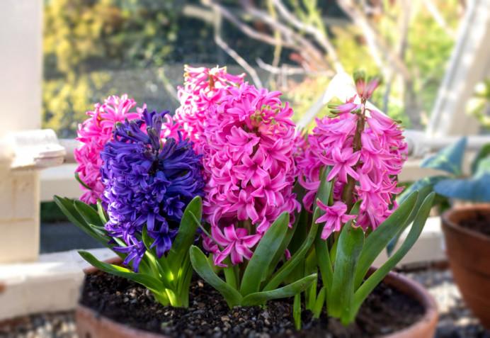 Piante invernali con fiori: quali sono, i nomi, le foto
