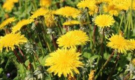 fiori da campo primavera terra zappare profumo colori coltivare