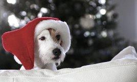 idee-regalo-cane-natale