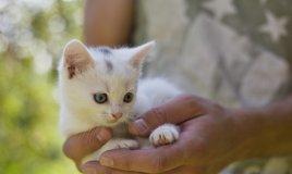 gatto razza felina casa