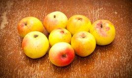 coltivare albero melo in giardino
