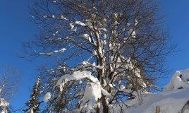 neve sport passeggiate sciare Friuli Venezia Giulia inverno vacanza