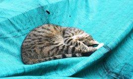 gatto felino predatore pigrizia cucciolo addestramento padrone