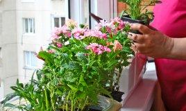 piante green tossiche incolumità bambini animali domestici