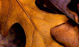 foglie secche compost terriccio autunno giardino concimazione
