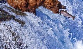 Alaska parchi ghiacciai laghi grizzly