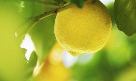limone pulizie casa naturali trucchi risparmio