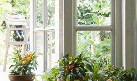 piante arredo casa bagno colore interno