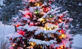 albero Natale neve ghiaccio viaggio Trentino Alto Adige