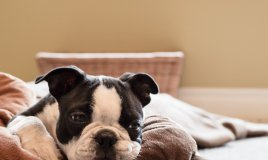 cane gatto pulci cuccia collare cuscino lavaggio