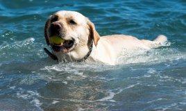 cane vacanza acqua mare lago relax amico padrone