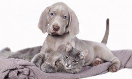 cane gatto igiene pulizia cura