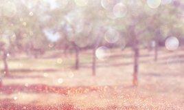 glitter brillantini fotografia