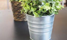 piante casa orto