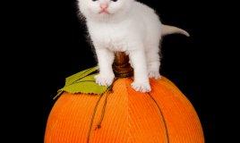 zucca cuscino gatto