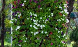 verticale-giardino-piante
