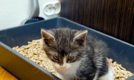 lettiera gatto evoluzione autopulente igiene
