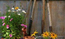piante-attrezzatura-giardino