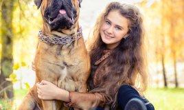 bullmastiff, cane, descrizione