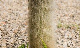 cactus- piante grasse