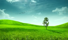 verde, natura, campo, prato, parco, giardino, pascolo