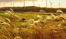 ventoso, aria, soffiare, brezza