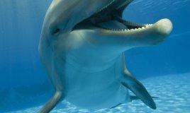 delfino, mare sogno