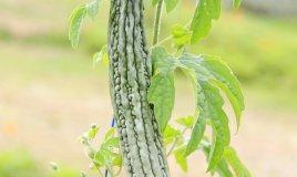spezie verdure oriente americhe africa