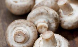 funghi consigli conservazione raccolta coltivazione casa autunno