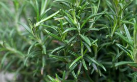 erbe-salute-piante