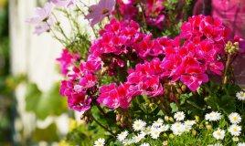 piante-appartamento-fiori