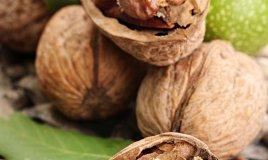 frutta guscio secca benefici salute proprietà nutritive