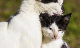 gatto toelettatura grooming benessere cura pulizia