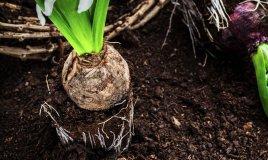 bulbo-primavera-piantare