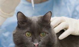 cane gatto animali vaccinazioni vacanza malattie