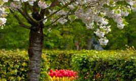amore-giardino-fiori