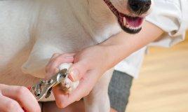 cane unghie taglio controllo sicurezza modalità suggerimenti