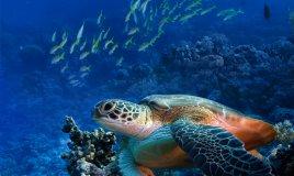 eco-turista rispetto ambiente ecologia no rifiuti no spreco no inquinamento mare