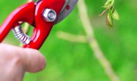 potatura-pianta-curare