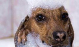 cane animale toelettatura cura igiene lavaggio bagno